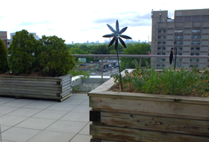Image of roof terrace